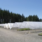 521_quonset_greenhouse